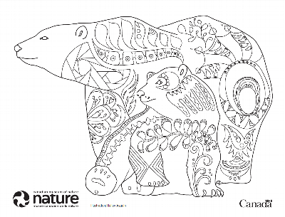 Canada Day Colouring Contest - Bears