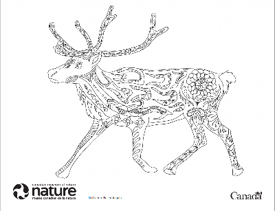 Canada Day Colouring Contest - Caribou